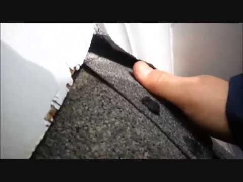 How to catch squirrels entering attic