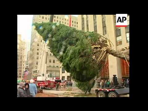 New York City's Rockefeller Center Christmas tree is almost ready for the holidays. The 76-foot Norw
