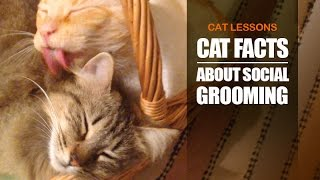 5 Reasons Why Cats Groom Each Other