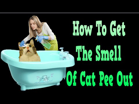 How To Get The Smell Of Cat Pee Out, How To Remove Cat Urine, Cat Odor Removal, Cat Smells