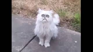 What the fuck is that ? Is that a fucking cat ?