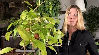 UNUSUAL AND RARE HOUSEPLANT TOUR