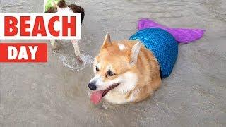Beach Day Pets!