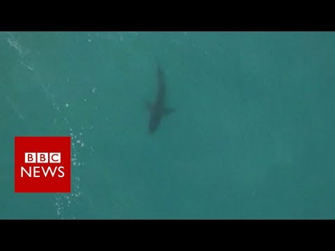 Surfer's close encounter with shark... again - BBC News