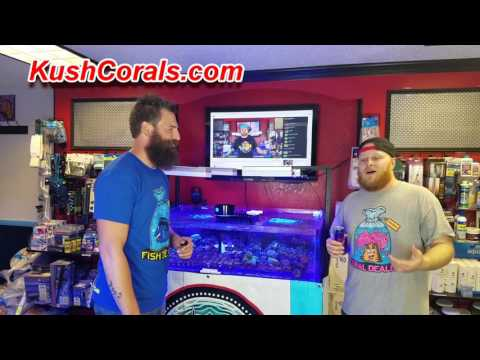 Lets Talk Tanks with Bobby Moon from Chicagoland Aquariums Kush Corals Part 2