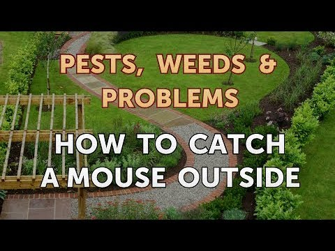 How to Catch a Mouse Outside