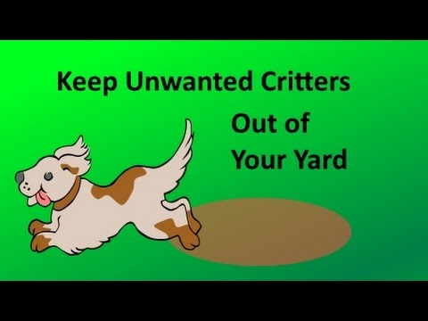Keep Animals Out of Your Yard
