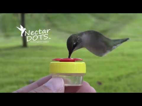 Feed hummingbirds by hand with Nectar Dots!