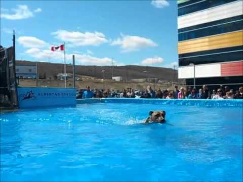 Shogun Jump #1 - 2012 Alberta Dock Dogs in Calgary