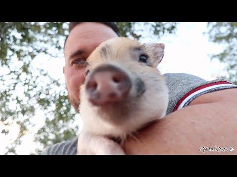 MY TEACUP PIG BUBBA