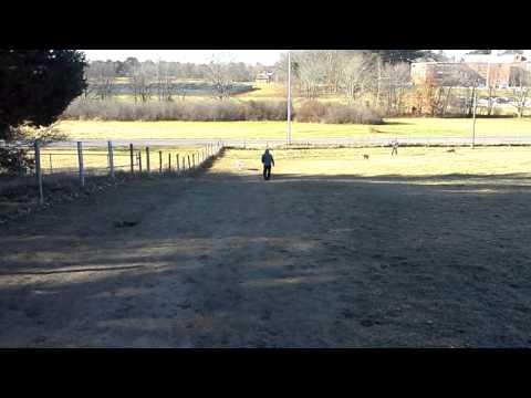 Jersey Dog Park Nov. 2013