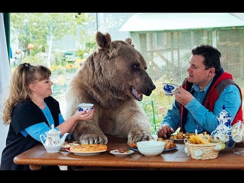 A Pet Bear in a Russian Family