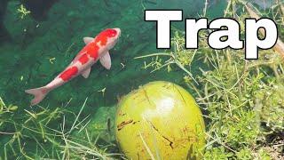Coconut Fish-Trap catches RARE COLORFUL Fish