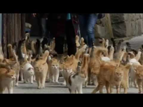 Japan's Cat Island - where the animals outnumber humans by six to one