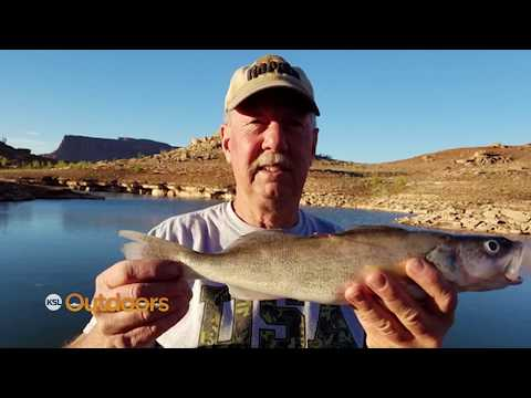Lake Powell Walleye Tagged Fish Contest