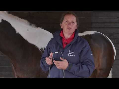 How to Take a Horse's Pulse and Respiratory Rate