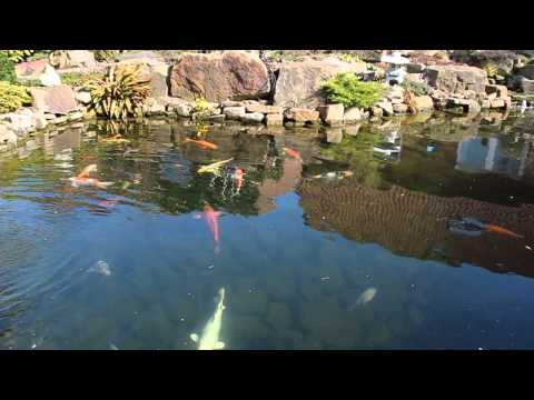 Tetra Pond Care: Algae Control
