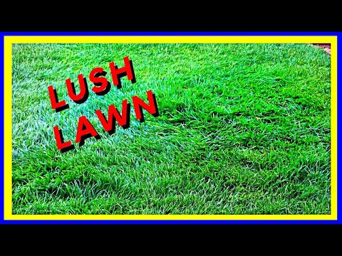 My Secret to a Lush Green Lawn