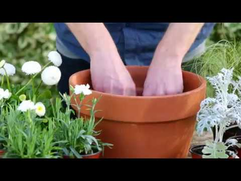 How to plant a pot