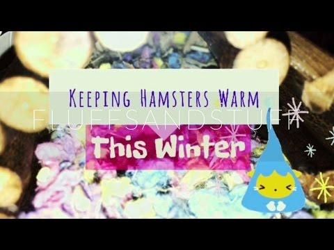 Keeping Hamsters Warm!!