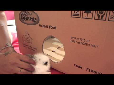 HOMEMADE MINI BUNNY PLAY BOX