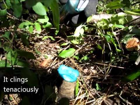 How to Kill Weeds without Killing Plants
