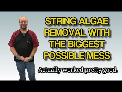 String Algae removal idea with chimney brush on a drill