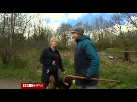BBC News - NI introduces compulsory microchipping for dogs.flv