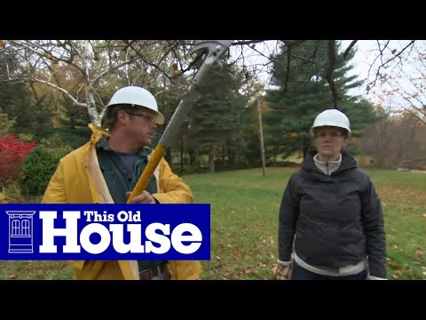 How to Prune a Crabapple Tree