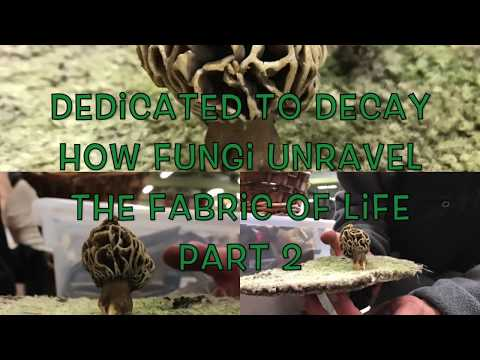 Dedicated to Decay: How Fungi Unravel the Fabric of Life Pt 2 Mycology Mycoremediation Soil Building