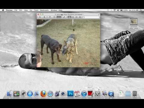How to Crop a picture using Preview - MAC