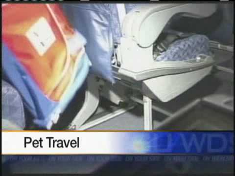 Problem Solvers: Airline Introduces New Pet Carrier