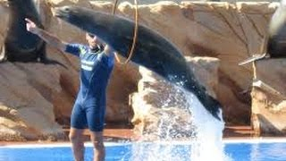 Dolphins amazing stunts (never seen before)::))))