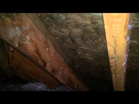 Getting Rid Of Attic Mold Stains When The Sale Of Your Home Depends On It Lisle, IL