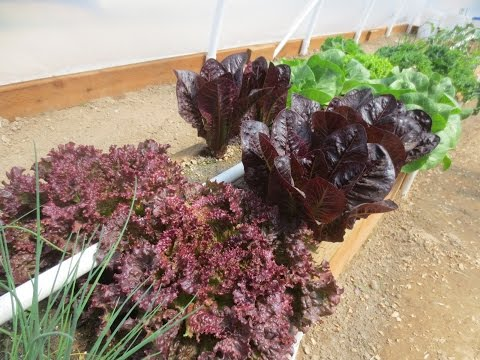 Geothermal Greenhouse Garden: April 20 2015