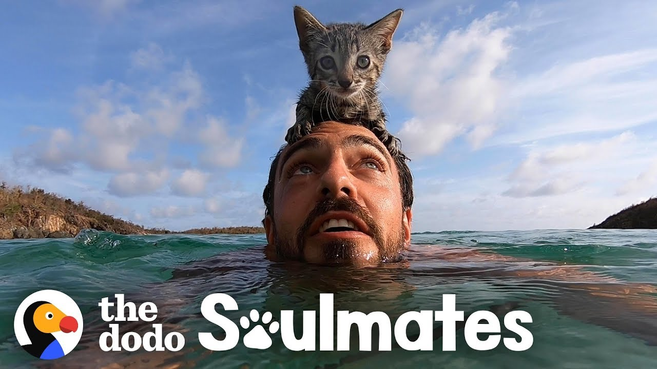 5-Week-Old Kitten Loves Swimming With Her Dad | The Dodo Soulmates
