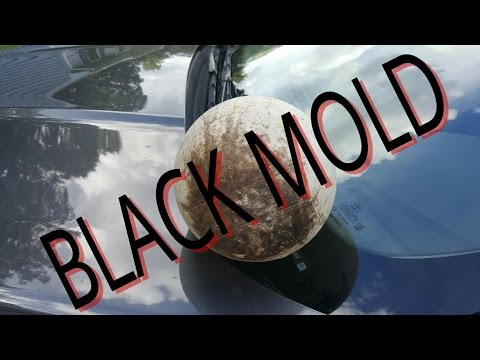 Black Mold: The Symptoms, Causes And Treatments