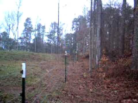Deer jumping over electric fence