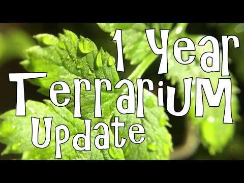 1 Year Terrarium Update