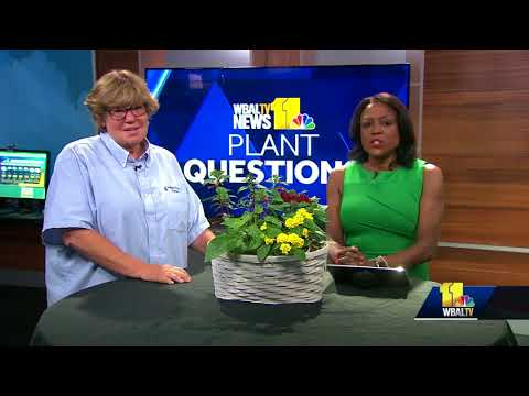Plant questions: Is too much water bad for plants?