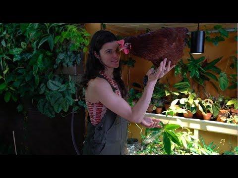 Ep 54: Plant One On Me: Grow Lights for Houseplants