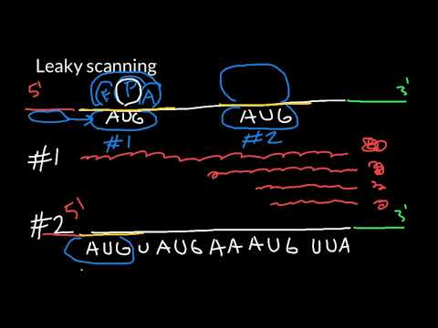 What is a Leaky Scanning?