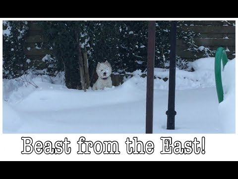 SNOW DAY! BEAST FROM THE EAST ATTACKS SCOTLAND | My Fashion Cupboard Baby Vlogs