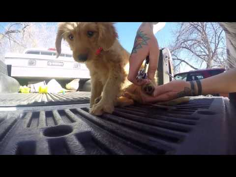 Puppy Training and Imprinting