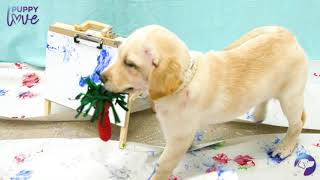 Pupcasso - Painting with Puppies | Southeastern Guide Dogs