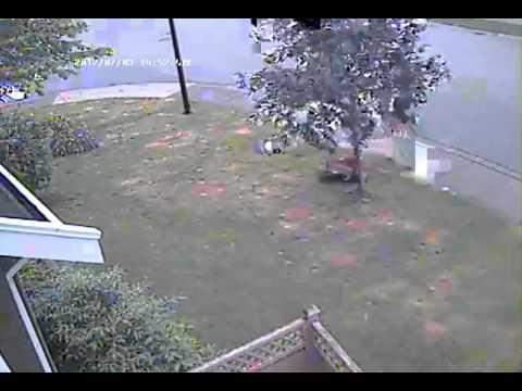 dog poop video at my lawn