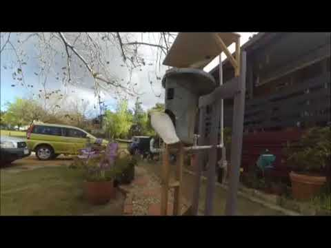 Working Cat-proof bird feeder