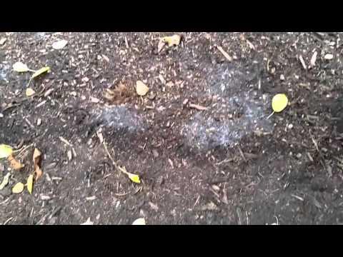 Soil Fungal Growth Stimulation