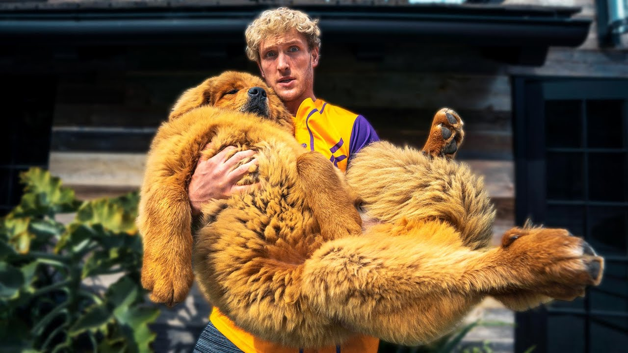 I bought the World's Biggest Puppy