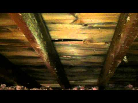 Home Inspection Found Attic Mold In My Home. Now What? Hanover Park, IL